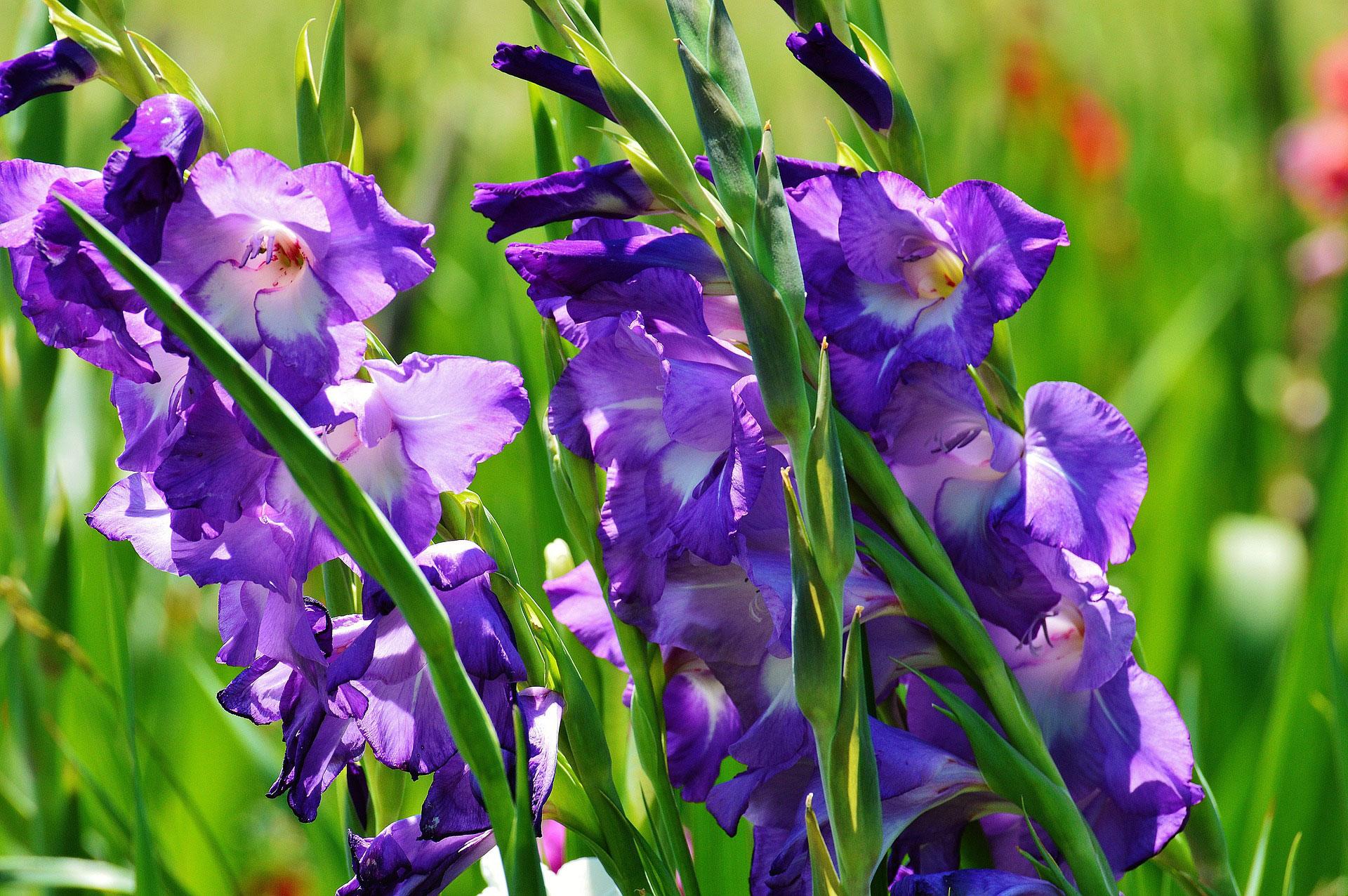 Flower facts archives tudor rose florist ballincollig cork blog flower facts izmirmasajfo